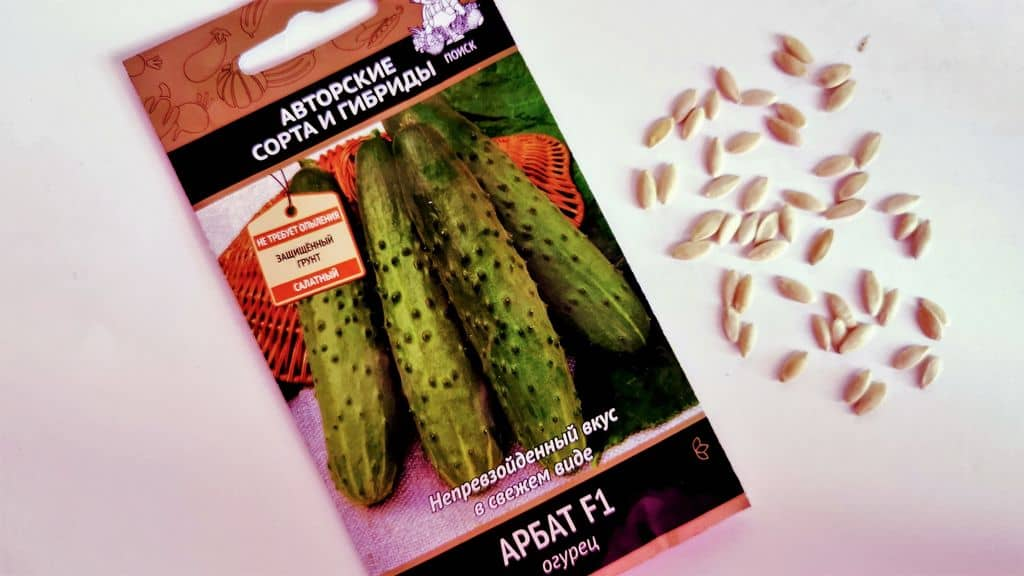 осмотр семян огурцов
