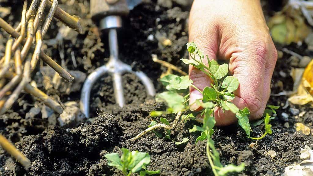 Средство от сорняков — химические и органические средства борьбы с сорняками на загородном участке