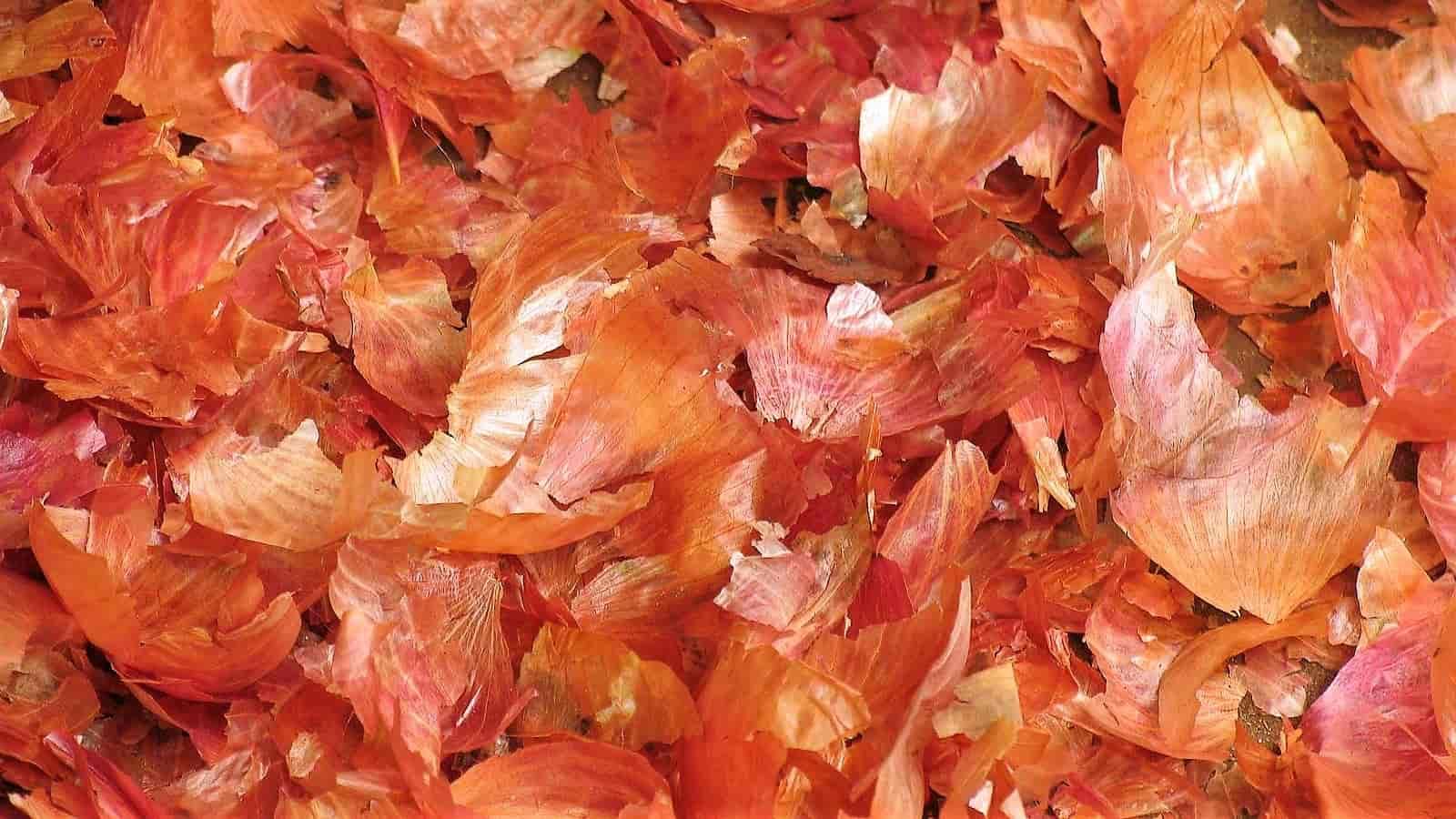 Удобрение из луковой шелухи для комнатных растений