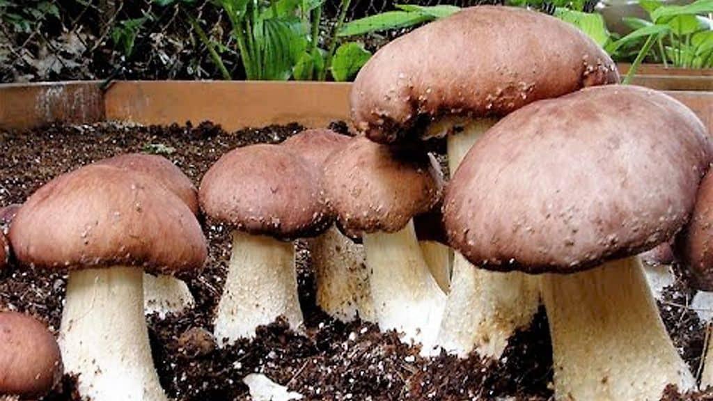 Как построить грибницу