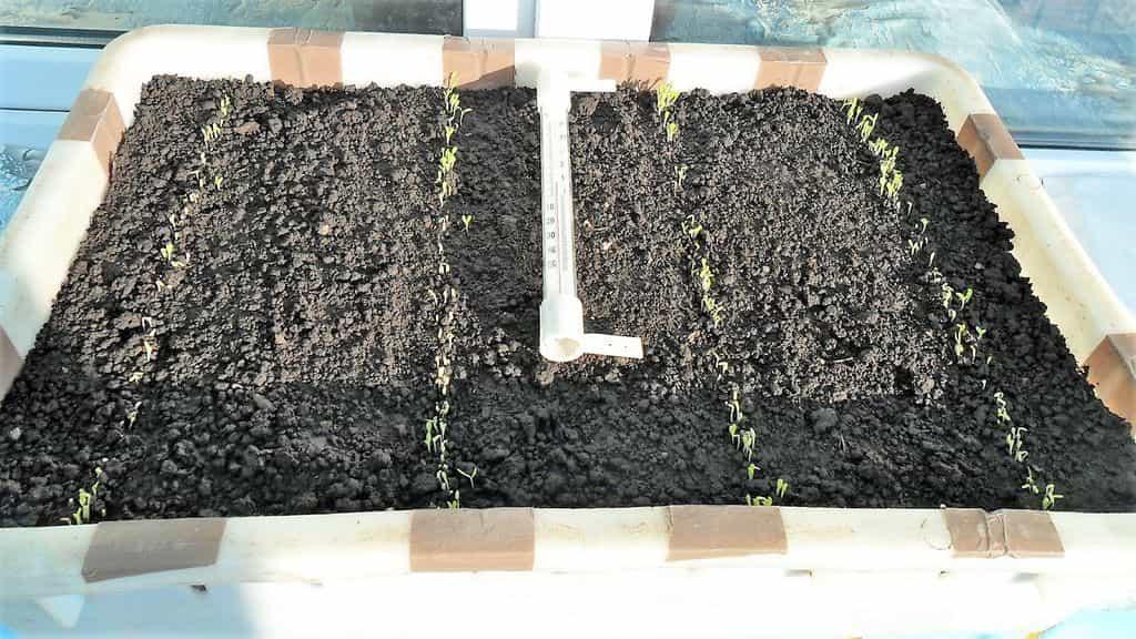 посев семян салата