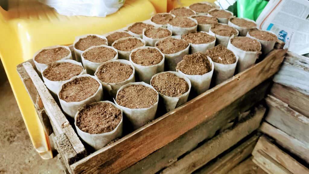 подготовка почвы для рассады