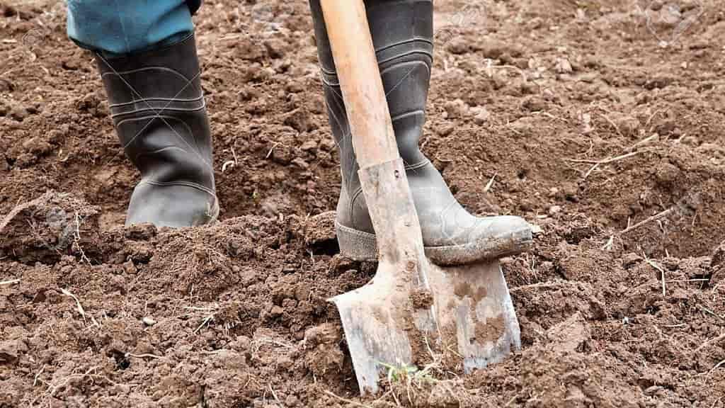 осенняя или весенняя обработка почвы